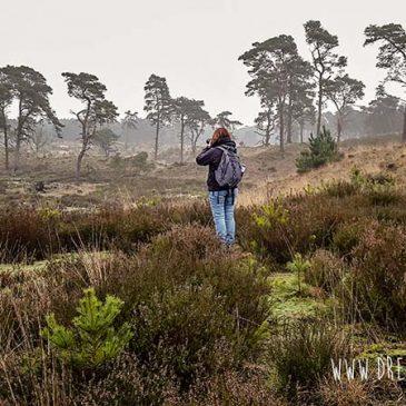 Wandelen net over de grens met Belgie: Kalmthoutse heide