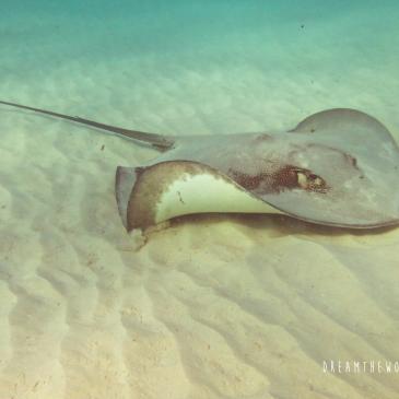 De beste snorkelplekken in Australië, je vindt ze hier